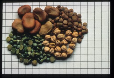 The Italian and European  Legal Framework for Farmers' Seeds System:  Who Owns the Seeds?