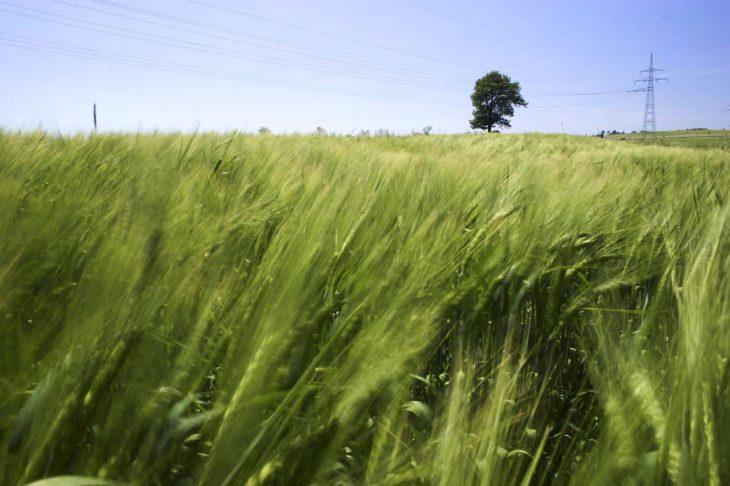 Il Parlamento Europeo chiede un'azione urgente sull'accesso alla terra e la sua concentrazione in Europa!