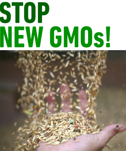 I nuovi OGM spiegati dal Coordinamento Europeo della Via Campesina