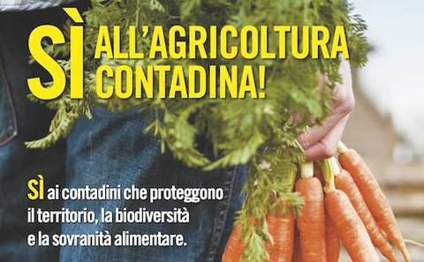 THE POPULAR CAMPAIGN FOR PEASANT AGRICULTURE IN THE CONTEXT OF ITALIAN AGRARIAN SYSTEM 5