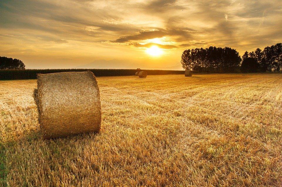 Il Parlamento Europeo chiede un'azione urgente sull'accesso alla terra e la sua concentrazione in Europa! 1
