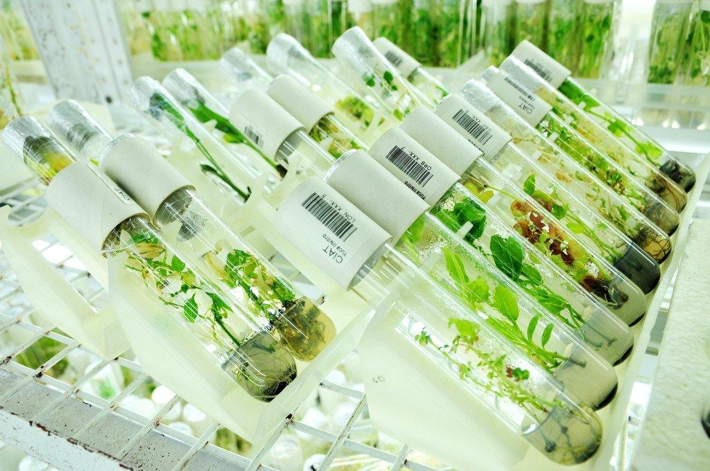 L'industria sementiera e le multinazionali sono pronte a dar battaglia alla Società Civile al prossimo incontro della Convenzione sulla Diversità Biologica